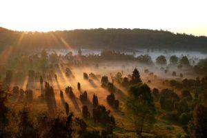 Küneburger Heide im Sonnenaufgang