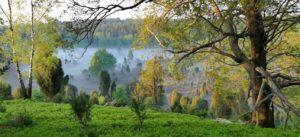 Frühlings-Heide im Morgennebel